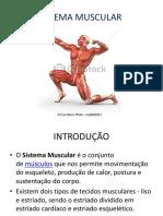 Sistema Muscular