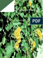Plan de Area Naturales 2019