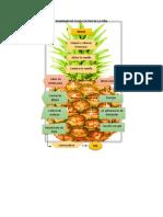 Diagrama de Flujo Cultivo de La Piña