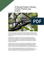 Mengenal Musang Pandan