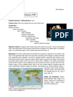 Seafdec Biodiversity Research Masapequena
