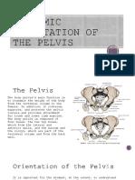 Anatomic Orientation of the Pelvis