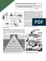 Guía 9 Biología Grado Once