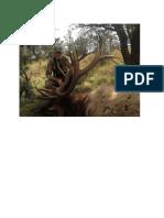 5125-CO-L-S-521-2300-Elk-IN3APAO-RBRG-EFA2NST Great Private Land Elk Hunting-Deluxe Lodge.pdf