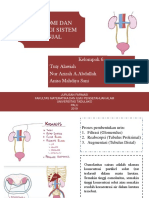 Anfisman Sistem Ginjal