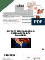 Páncreas y glándulas anexas (Histología)