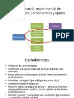 LAB 3. Carbohidratos y Lípidos