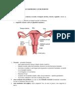 sistemul-reproducator