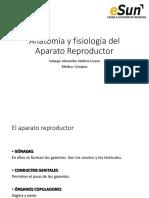 3 Anatomía Sistema Reproductor