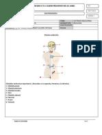 Taller Sistema Endocrino 8