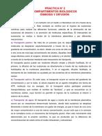 Informe 2 Osmosis - Copia
