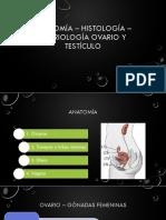 Anatomía – histología – embriología ovario y testículo.pdf