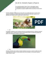 Clasificación de Los Animales Según Su Especie