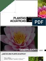 Plantas Acuaticas Miriam Elizabeth Pérez Vázquez