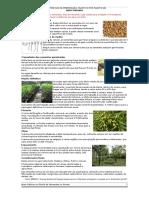 Boas Práticas Na Preparação, Plantio e Pós Plantio de Neem Indiano v.2.1