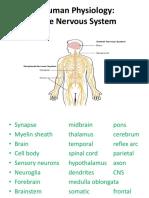 2-Human-Body-Nervous-system.pptx