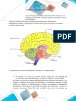 morfofidiologia....docx