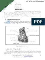configuracion  externa corazon