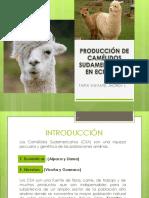 Producción de Camélidos Sudamericanos en Ecuador