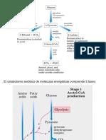 Ciclo de Krebs y Fosforilacion Oxidativa (5).Ppt [Autoguardado]