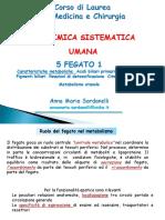 05 Fegato 1