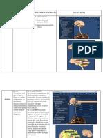 Imágenes con el Aplicativo Biotk_Daniela Restrepo (1).docx