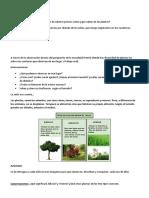 Secuencia Didáctica Las Plantas y Sus Partes 1 Año