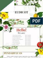 0 34743 Taktum - Eudicot