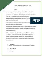 Informe 5 artropodos