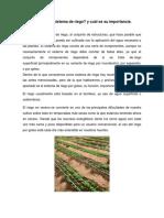Qué es un sistema de riego.pdf