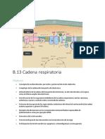 B.13 Cadena Respiratoria