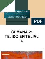 PARCIAL PRÁCTICO HISTOLOGÍA