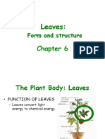 leaf structure.ppt