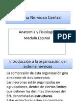 2-Sistema Nervioso Central- Medula Espinal