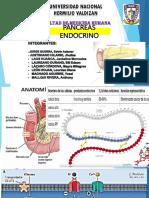 pancreas endocrino unheval