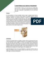 DISTRIBUCIÒN ANATÒMICA DEL NERVIO TRIGEMINO - WORD.docx