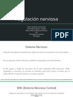 Regulación Nerviosa