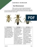 7. Das Bienenwesen
