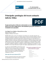 Patología Urinarias del Gato.pdf