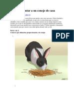 Como Alimentar a Tu Conejo