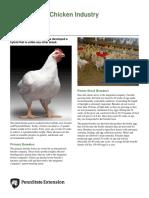 Modern Meat Chicken Industry