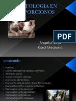 Etologia en Porcinos