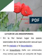 10.FLOR