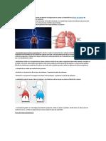 La respiración es el proceso que consiste en obtener el oxígeno para el cuerpo y la expulsión de.docx