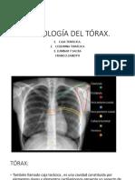 Integracion Clase Osteología Del Tórax