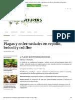 Plagas y Enfermedades en Repollo, Brócoli y Coliflor – Agriculturers.com _ Red de Especialistas en Agricultura