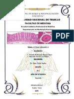 Sistema Urinario II - Histología