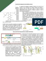Regulación Por Catabolitos Del Operón Lactosa