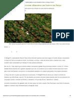 Vizinhos plantam e trocam alimentos em bairro na Suíça _ CicloVivo.pdf