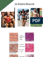 04 Sistema Muscular EF